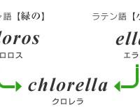 chlo08